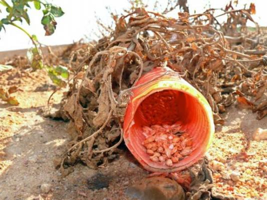 el uso ilegal del veneno en espantildea ha matado a maacutes de 180000 animales en los uacuteltimos 20 antildeos