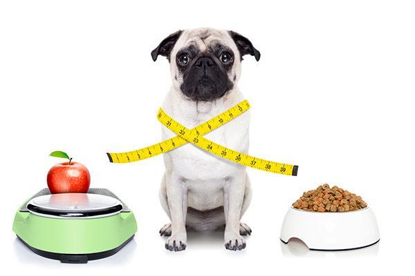 incremento ilimitado de la obesidad en perros