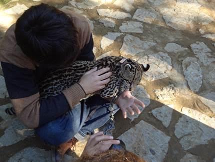 infozoos recoge firmas para pedir el cierre del zoo de castellar en caacutediz