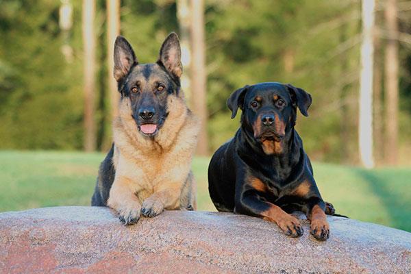 iquestqueacute y coacutemo ven los perros