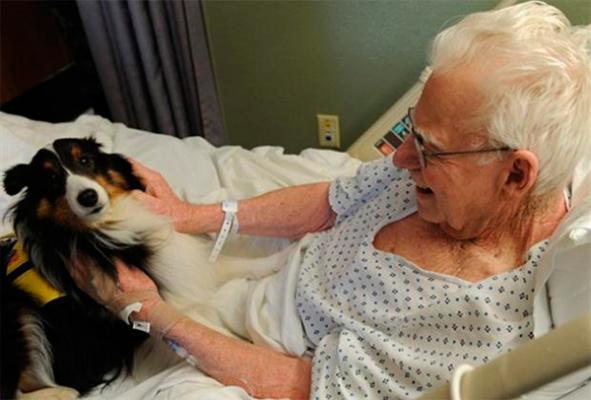 la ldquocarintildeoterapiardquo animal en un hospital de canadaacute se hace viral