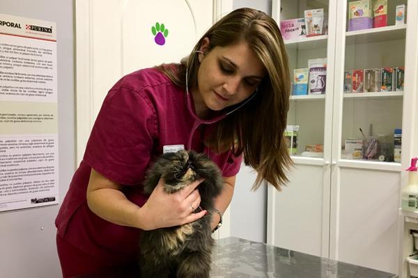ldquolos duentildeos entienden que los mismos avances que hay en medicina humana tambieacuten los hay la veterinariardquo