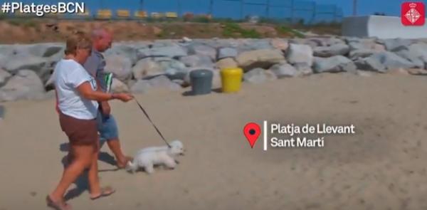 maacutes de 10400 perros ya han disfrutado de su playa en barcelona