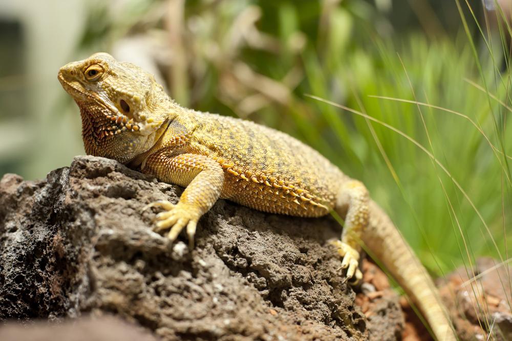 Más allá de una moda: Conoce las claves para el cuidado de animales exóticos