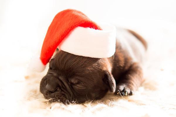 el cov de madrid pide una reflexioacuten previa a la decisioacuten de regalar una mascota en navidad