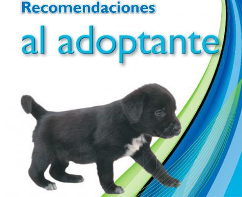 madrid salud y covm editan una serie de guiacuteas con recomendaciones para los adoptantes de mascotas