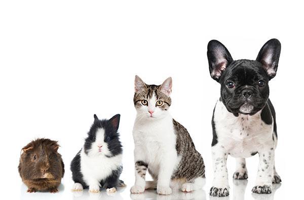 tu mascota en casa de un cuidador el mejor hotel para perros