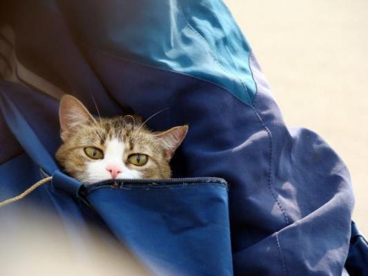 las mascotas tambieacuten viajan con maleta