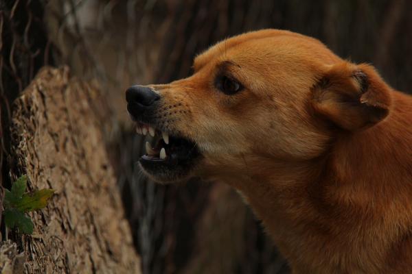 melilla confirma dos casos de rabia canina