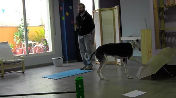la memoria de los perros puede recordar e imitar nuestras acciones