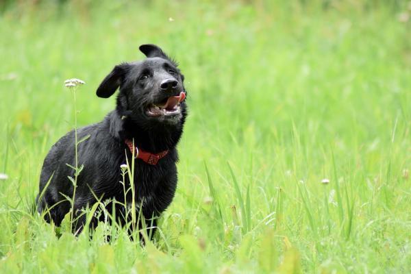 los nintildeos con mayor riesgo de ser mordidos porque no saben que un perro puede atacar si se asusta