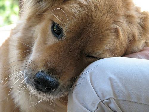 nintildeos y nintildeas viacutectimas de maltrato reciben terapia con perros en los centros de mujeres