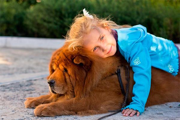 nuevos descubrimientos sobre el cerebro canino