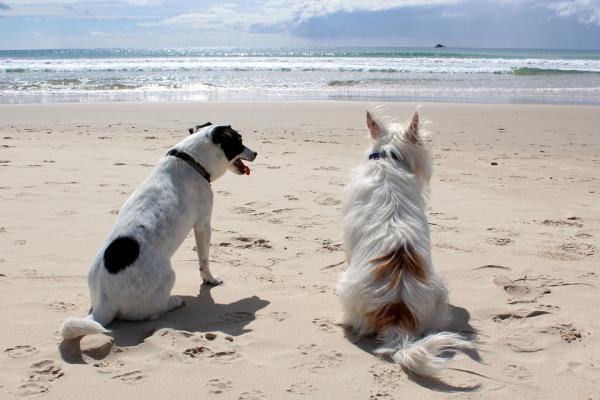ocho consejos para el cuidado de las mascotas a la vuelta de vacaciones