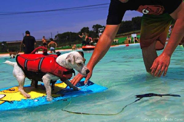 parque acuaacutetico canino un espacio para divertirse juntos