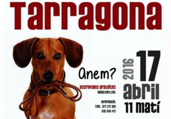 un paseo de mascotas en tarragona para promocionar buenos haacutebitos