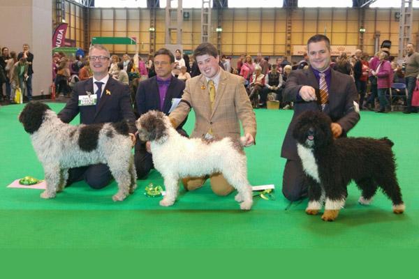 un perro sevillano entre los ganadores de la mayor exposicioacuten canina del mundo