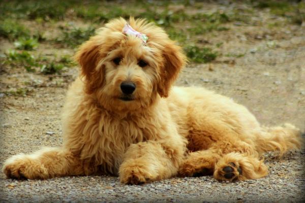los perros aceleran los avances de nuevos tratamientos contra el caacutencer