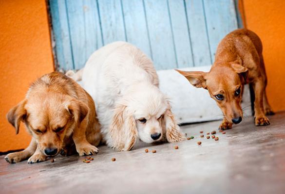 los perros alimentan a sus amigos
