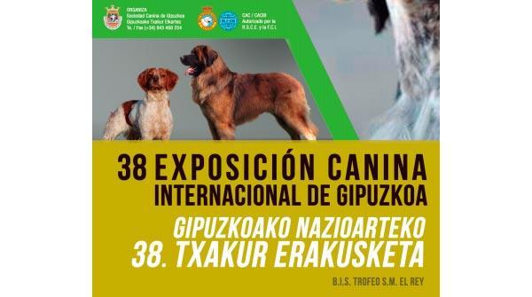 600 perros participaraacuten en la xxxviii exposicioacuten canina internacional de gipuzkoa en iruacuten