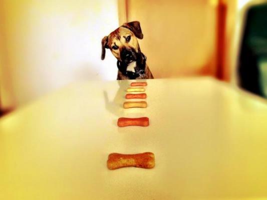 los perros prefieren las felicitaciones de sus duentildeos antes que la comida
