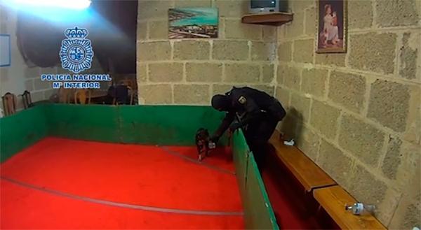 la policiacutea nacional lidera una macrooperacioacuten contra el maltrato animal