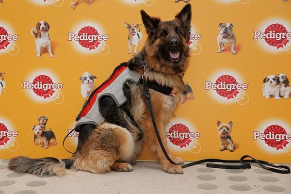 presentan el primer dispositivo que interpreta los momentos de felicidad de los perros