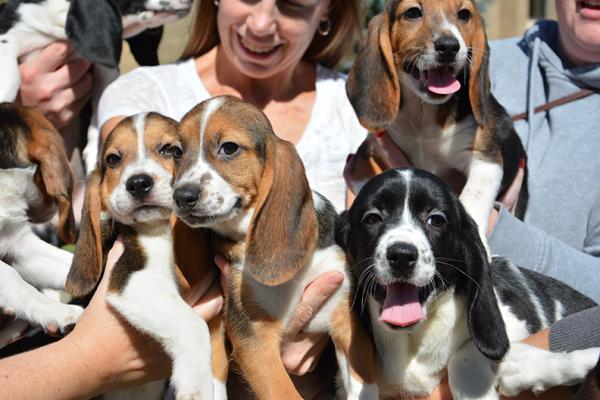 primeros cachorritos gracias a la fertilizacioacutennbspin vitro