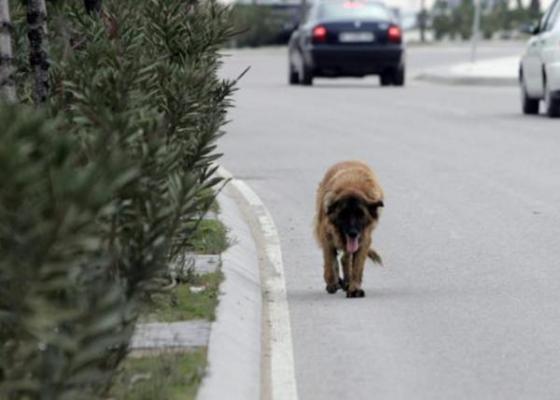 proponen crear un registro de maltratadores de animales y velar por los animales abandonados