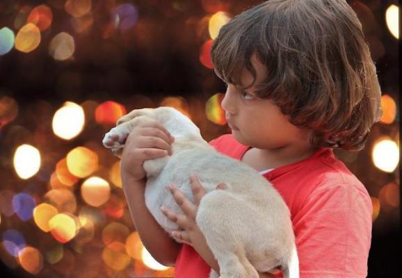 protectoras y ongs piden no regalar mascotas por navidad