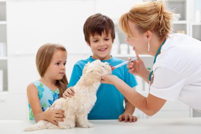 Proteger a nuestro cachorro: Vacunación