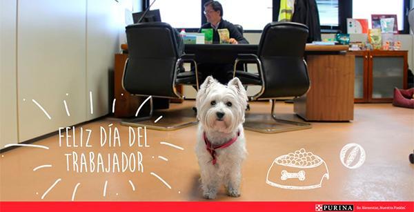 purina pone en marcha petswork un programa para la convivencia entre mascotas y trabajadores en la oficina