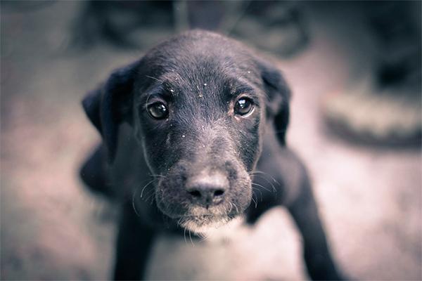 queacute hacer cuando encontramos un animal perdido abandonado o asilvestrado