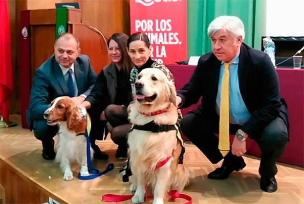 quoten las intervenciones asistidas con animales resulta primordial cuidar de su bienestarquot