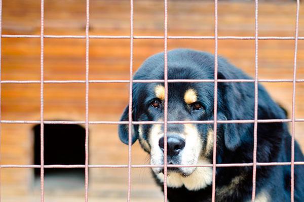 el quotsiacutendrome del perro negroquot no existe