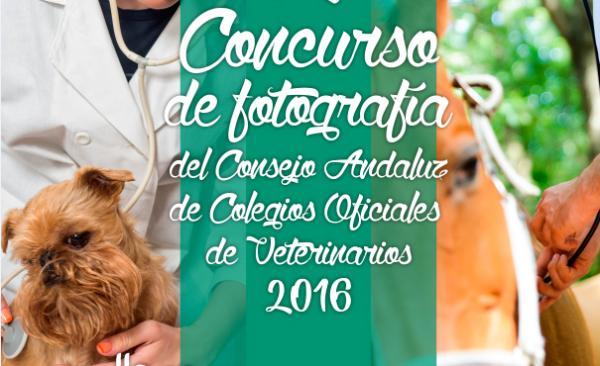 quotveterinarios en accioacutenquot tema del ii concurso de fotografiacutea del consejo andaluz de colegios oficiales de veterinarios 2016