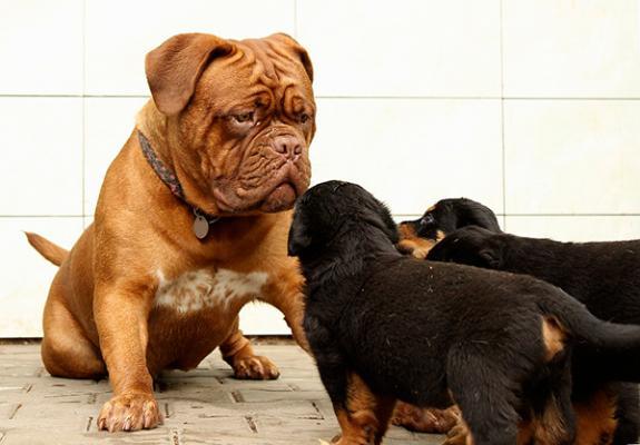 rastreatorcom da a conocer los nombres de los perros maacutes asegurados en espantildea