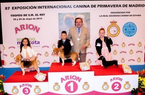 la real sociedad canina de espantildea con la 88 exposicioacuten internacional canina de primavera
