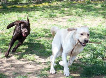 santa susanna acogeraacute del 23 al 25 de octubre las i jornadas sensibilizador del perro lazarillo en cataluntildea avanzando juntos