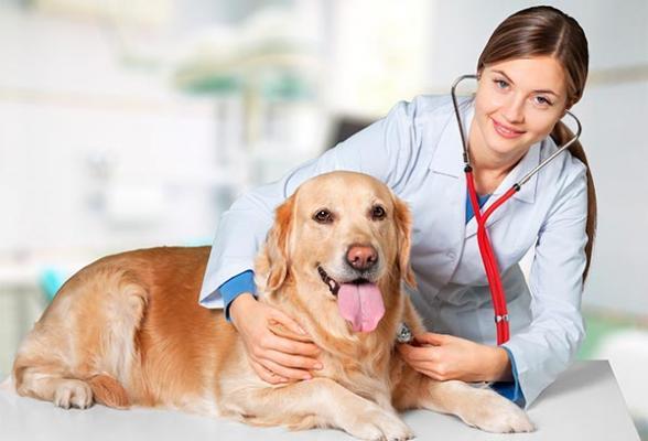 santeacutevet llega a espantildea para ofrecer sus seguros de salud animal para perros y gatos