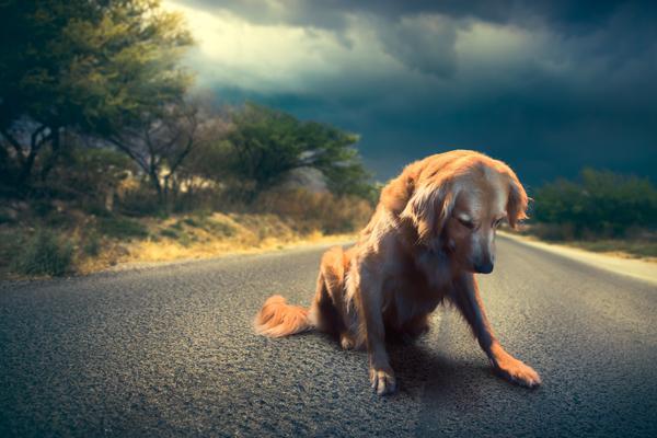 el abandono de mascotas aumenta hasta un 40 en semana santa
