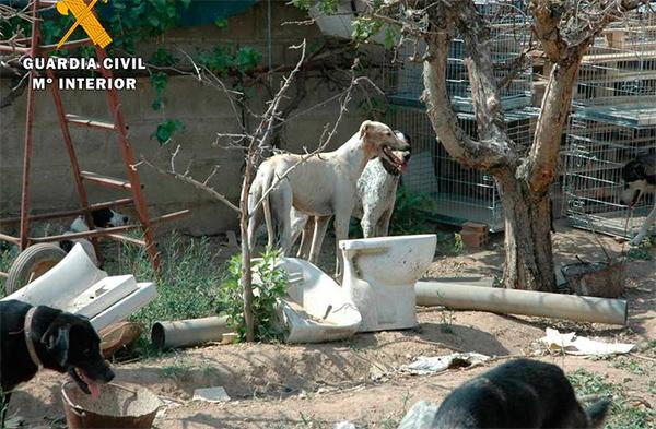 el seprona cierra 2016 con maacutes de 12400 actuaciones contra el maltrato animal