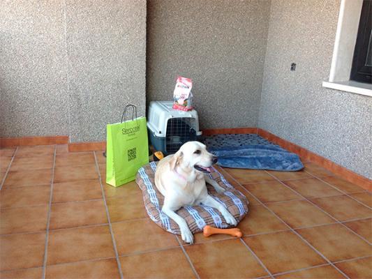 sercotel hotels ayuda a viajar con nuestra mascota