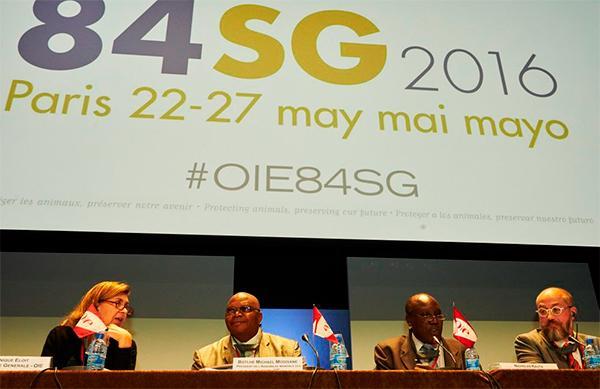 la 84 sesioacuten general de la organizacioacuten mundial de sanidad animal cierra sus puertas con eacutexito