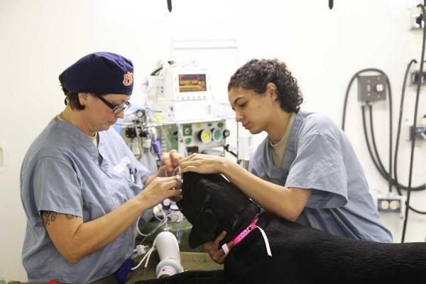 sevc presenta en primicia una novedosa vacuna para luchar contra la leishmaniosis canina
