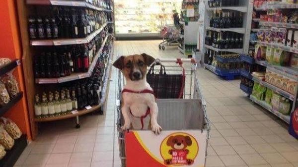 un supermercado italiano adapta los carros para hacer la compra con los perros