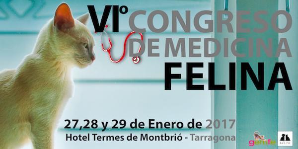 tarragona acogeraacute en enero el congreso de medicina felina gemfe 2017