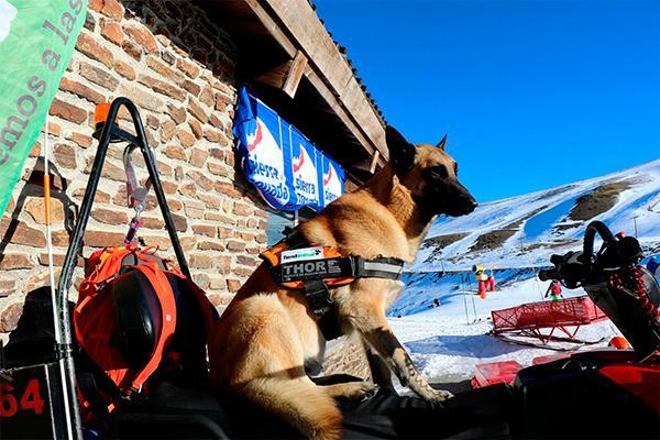 tiendanimal colabora con thor el perro rescatador de sierra nevada