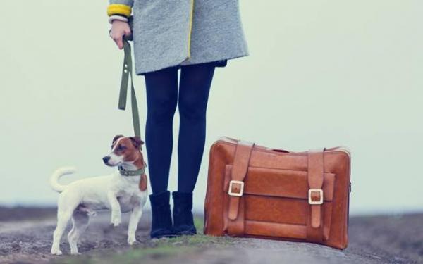 trucos y consejos para viajar con nuestras mascotas