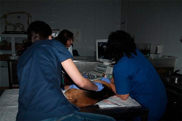 uchceu y neo animalia espantildea realizaraacuten actividades docentes en la facultad de veterinaria de valencia